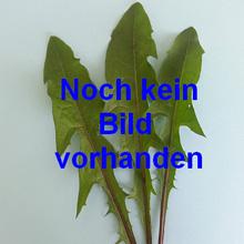 hyazinthen multiflora blau zwiebel gr i saatfix blumenzwiebel shop