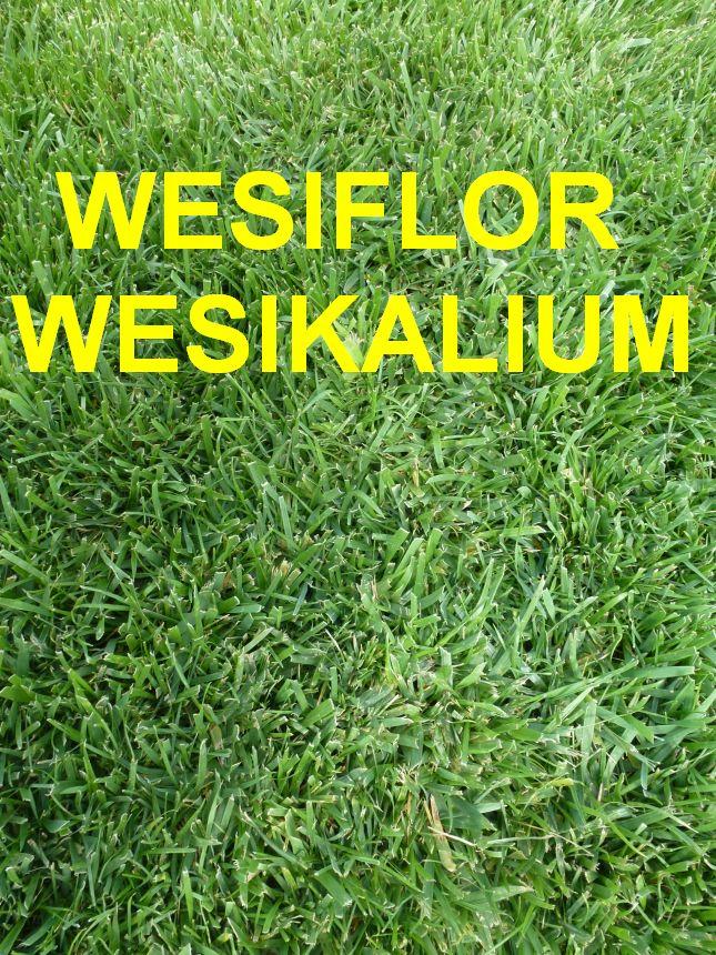 rasend nger 10 kg wesiflor und 10 kg wesikalium saatfix blumenzwiebel shop. Black Bedroom Furniture Sets. Home Design Ideas
